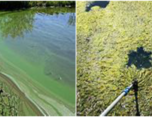 What are Harmful Algal Blooms?