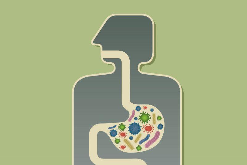 Ilustration of Stomach Chemistry